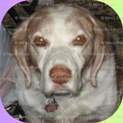 Kati dog