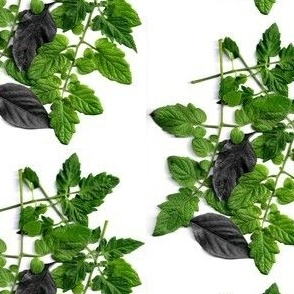 Tomato and Pepper Leaves, Tomato Highlights