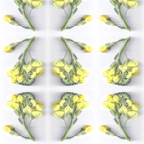 Broccoli Blossoms