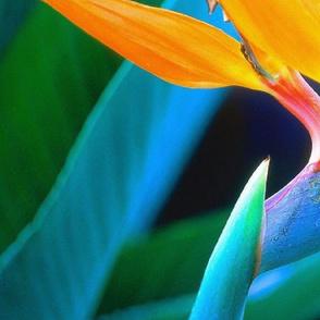 ENLARGED BIRD OF PARADISE