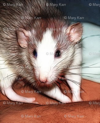Ozma The Friendly Roan Fancy Rat
