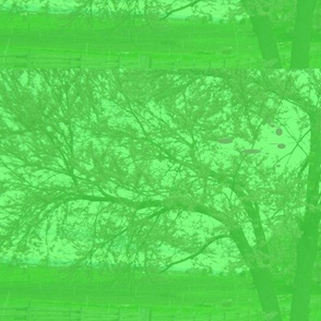 redbud_in_green