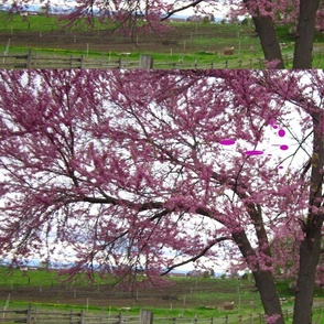 redbud_with_spots