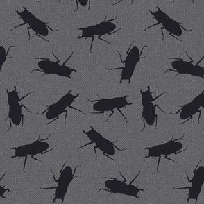 stag-beetle bugs on grey