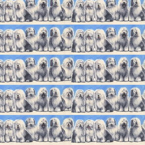 Old English Sheepdogs Border