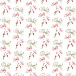 Dandelion Wine Coral