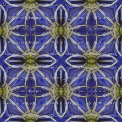 Flower Power - Clematis 3