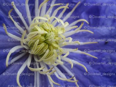 Flower Power - Clematis 1