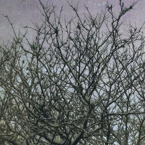 purple scheme branches