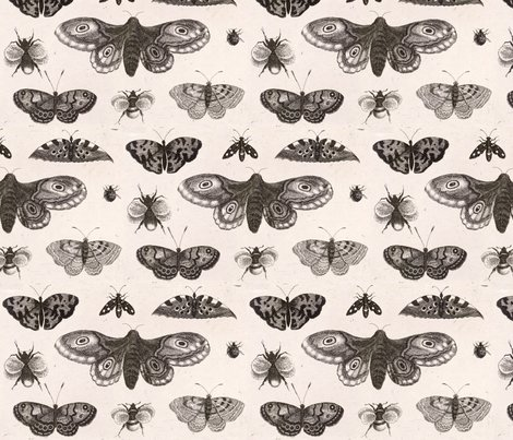 Rrrrrrwenceslas_hollar_-_a_moth__butterflies__and_bees_shop_preview