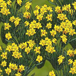 large_daffodil_field_grass_3_fq