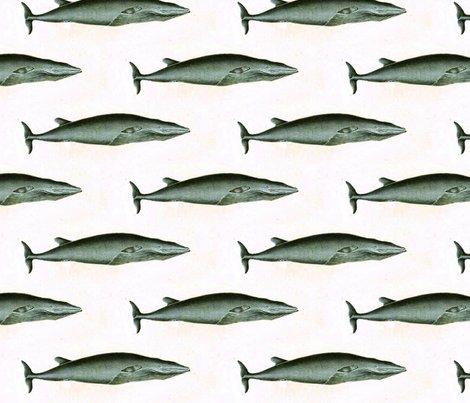 Rrrrranimal-sea-mammal-buffon-whale-4detail_shop_preview