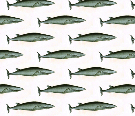 Whale fabric by flyingfish on Spoonflower - custom fabric