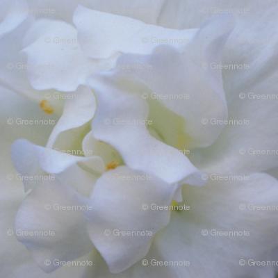 Gorgeous white flower