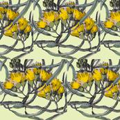 yellow on yellow eucalyptus