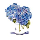 Rcape_cod_hydrangeas_on_white_new-1_shop_thumb