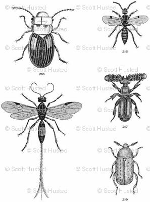 Beetles, Weevils and Mayflies
