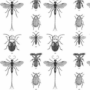 Beetles, Weevils and Mayflies