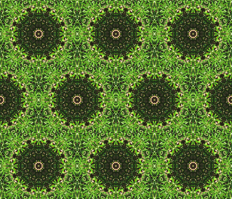 Star of Rosemary fabric by anniedeb on Spoonflower - custom fabric