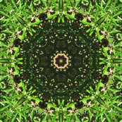 Rrosemary_star_4514_textured_resized_shop_thumb