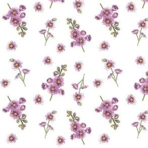 Lavender Larkspur