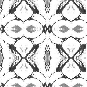 amaryllis grey