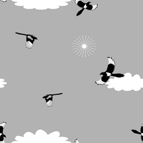 Jumbo Magpies flying in clouds gray sky