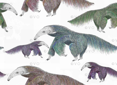 Anteaters!