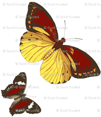 Butterflys' flight-ch