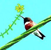 Rrrrrblack-chinned_hummingbird_ed_ed_ed_ed_ed_shop_thumb