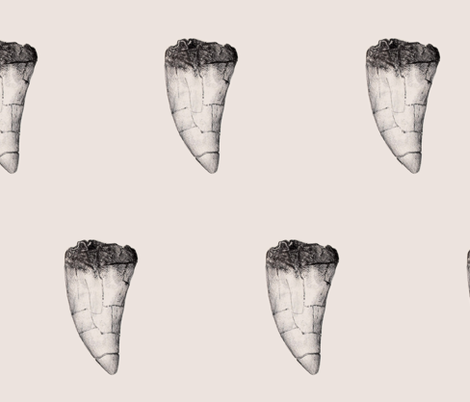 T-Rex Tooth fabric by rosie_collins_illustration on Spoonflower - custom fabric