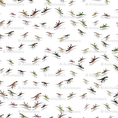 The Raptors Dance