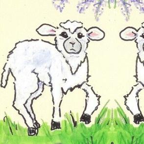 Lamb n lavender ed