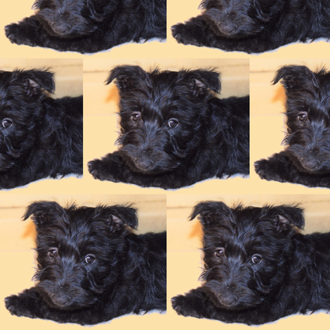Darcy_the_pooch_sf fabric by leilanewcombwolf on Spoonflower - custom fabric