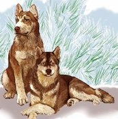 1204050_rrsiberian_huskies52_shop_thumb