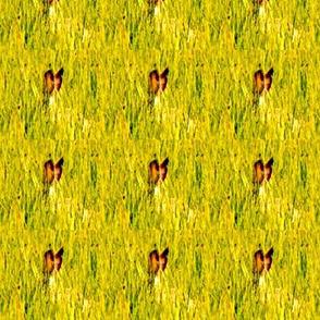Hippity hop on the bunny trail