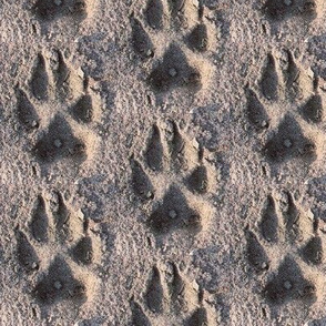wolf track in sand