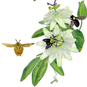 passion flower and carpenter bee