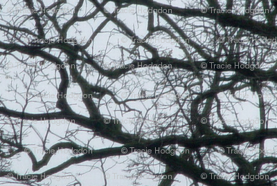 birdtree_crackle