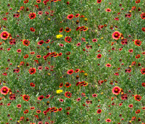Red Wildflowers of Texas fabric by j-andrew on Spoonflower - custom fabric