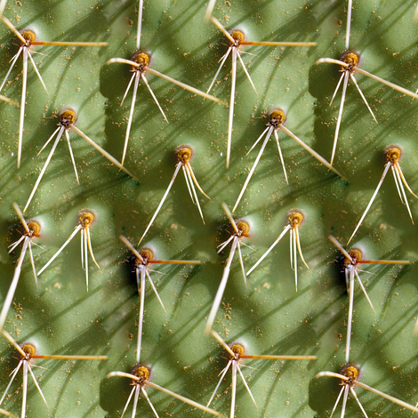 Cactus Close-up fabric by j-andrew on Spoonflower - custom fabric