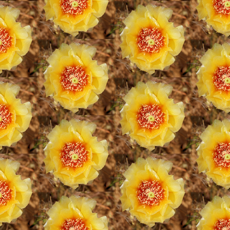 Cactus Flower fabric by j-andrew on Spoonflower - custom fabric