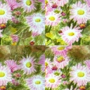 Pink_chrisantemums