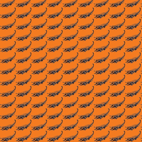 alligator orange