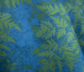 Rrrblue_green_fern_comment_175039_thumb