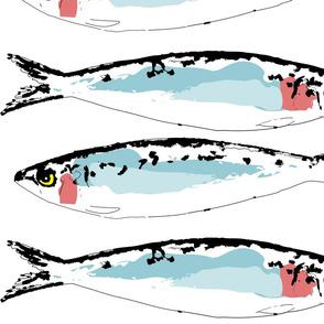 Sardines_Graphic