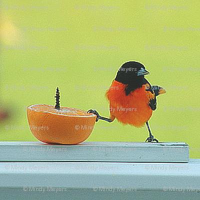 Shana's Bird