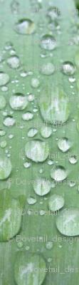 Raindrops  Keep Fallin'......on the Leaf!