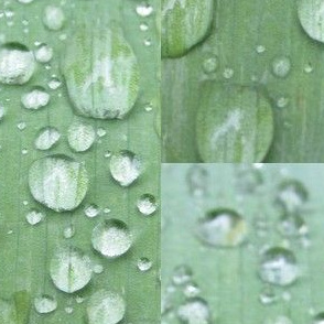 Raindrops  Keep Fallin'......on the Leaf!