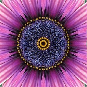 Flower Power 11
